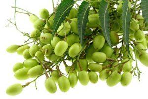 origine huile de neem